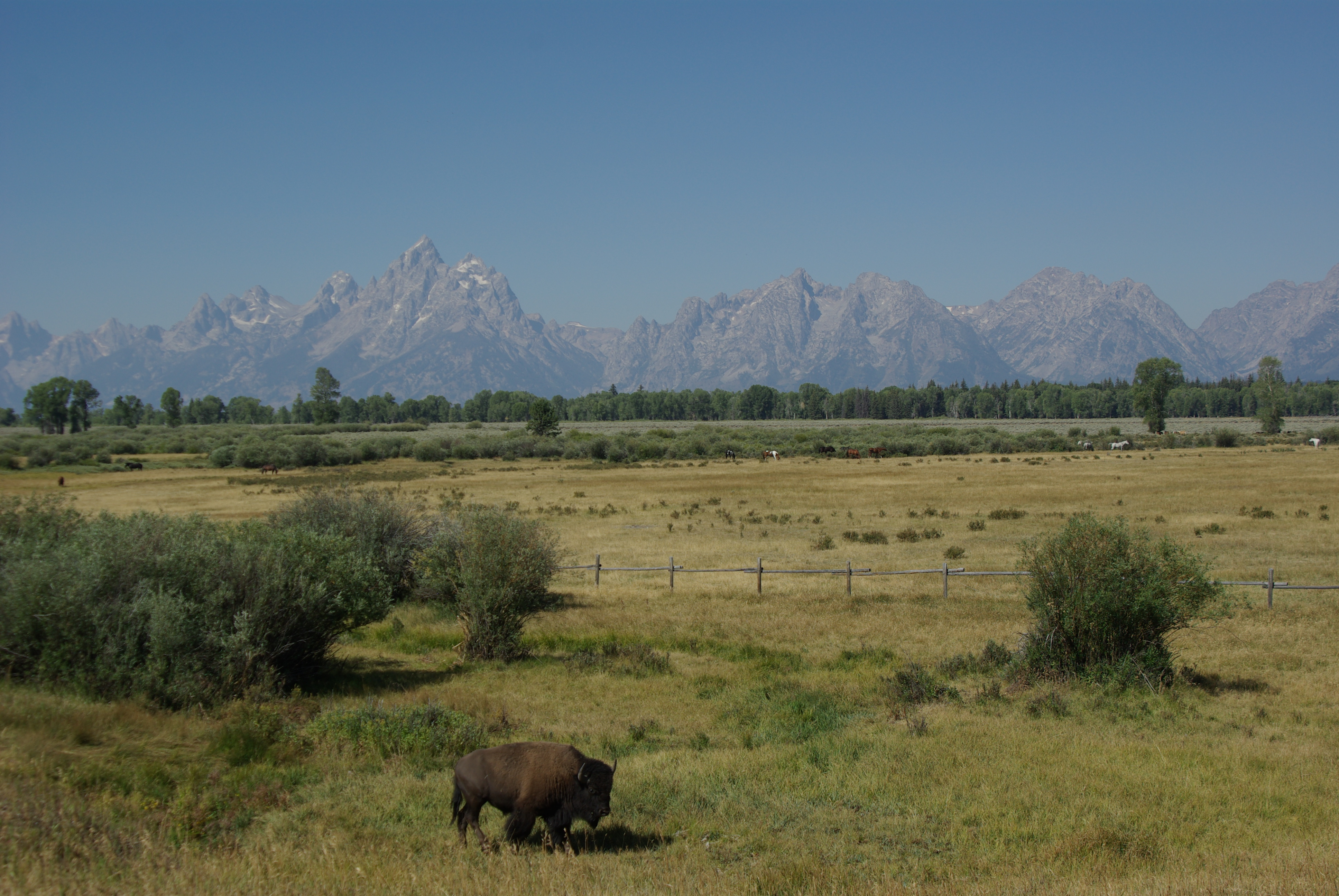 Posed under the Tetons for us.